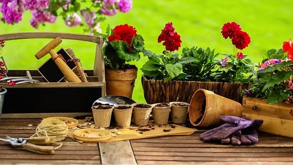 Gardening, tools, pots and  plants on the garden table