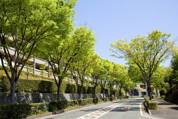 横浜の山の手住宅街新緑