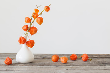 still life with red physalis