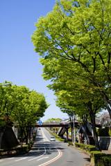 横浜の山の手住宅街の新緑