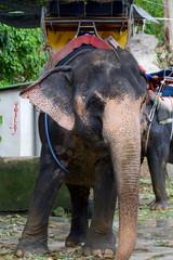 Elephant Trekking, Phuket, Thailand.