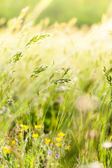 fiori ed erbe di prato selvatico