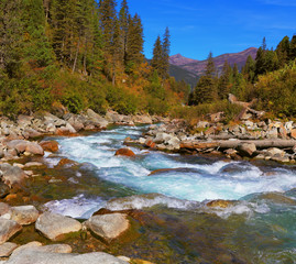 Rapid stream of forests