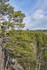 Лес среди гор