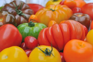 tomates de couleurs et de formes différentes sur fond bois blanc