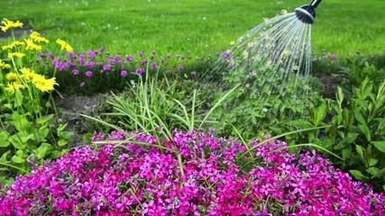 Blumengießen mit der Gießkanne