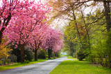 springtime - 82867131