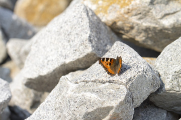 butterfly on the white background