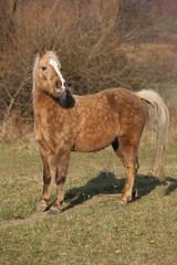 Adorable pony in autumn