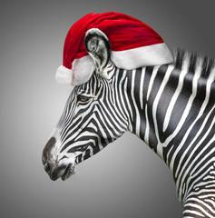 portrait of zebra