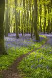 Światło słoneczne rzuca cienie w błękitu w drewnie