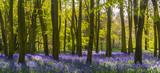 Światło słoneczne rzuca cienie przez błękity w drewnie