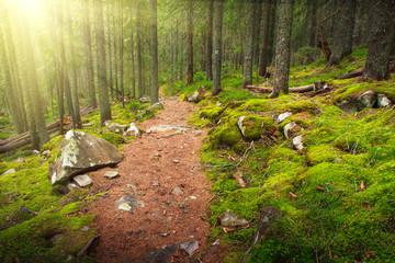 Landscape dense mountain forest.