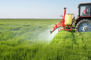 Tractor spraying wheat field