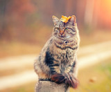 Siberian cat sitting on a wooden post - 82896516