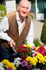 Senior pflanzt Blumen
