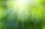 Fototapety Green blurred background