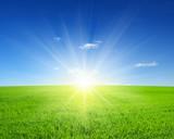 Fototapety  field and sun