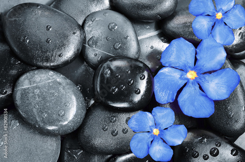 Obraz w ramie Flower and stones