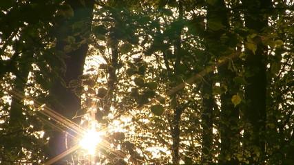 Forest sunrise time lapse. Springtime.