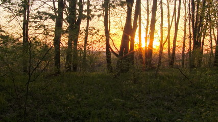 Forest sunrise time lapse. Springtime.