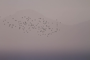 Hazy sunset with starlings in front of a mountain in gray tones