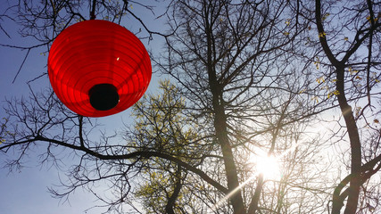Red Chinese lamp hanging on tree