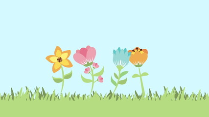 Flowers growth video animation, Video animation, HD 1080