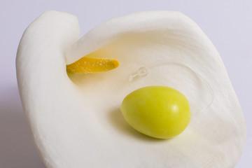 Jade egg for development of intimate muscles lie on white flower