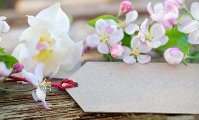 Apfelblüten mit Pappschild
