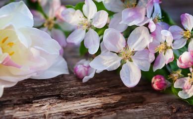 Tulpe und Apfelblüten auf Holz