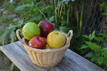 Corbeille de pommes