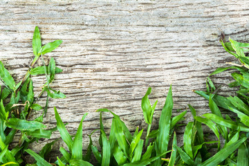Fresh grass against grungy concrete wall can used as background.