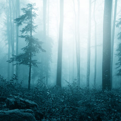 Fantasy blue color foggy bright forest © robsonphoto