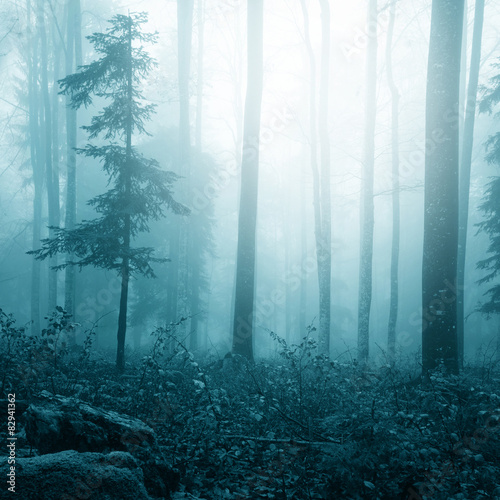 Fantasy blue color foggy bright forest