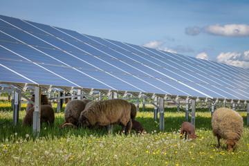 Solar Schafe