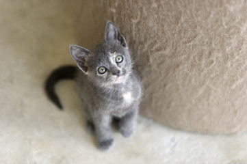 Cute Kitty Looking UP