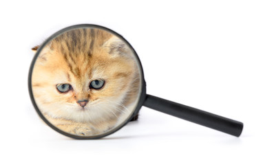 Kitten and a magnifying glass on white background.