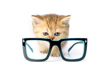 Kitten and glasses on white background