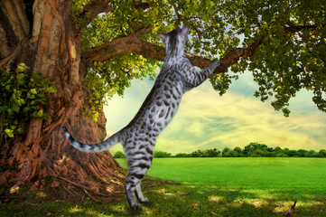 Savannah kitten playing under a tree on a sunny day