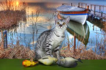 Savannah cat fishing on the lake