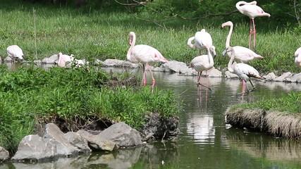 flock of flamingos in pond