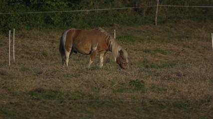 Braunes Pferd auf der Weide in Slow Motion, Zeitlupe