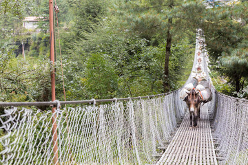 Horses carrying load crossing suspension bridge.
