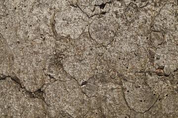 corteccia di pino invecchiato