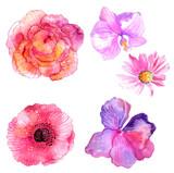 Fototapety Beautiful Watercolor flower set