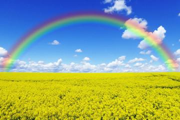 Rapsfeld mit Regenbogen