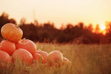 Fototapety pumpkins outdoor