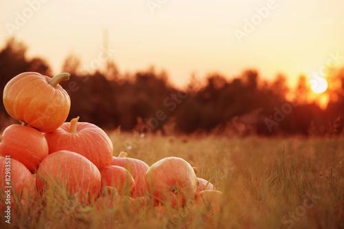 pumpkins outdoor