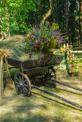 Old rural cart with dry grass and wildflowers